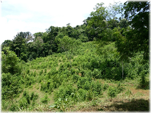 oceanviews, land, lots, for sale, south pacific, development, invest