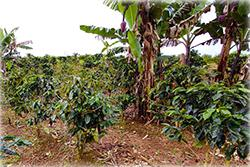 Costa Rica land for sale, ocean view, mountain view, waterfall, panoramic, south pacific, cattle, horses, development land