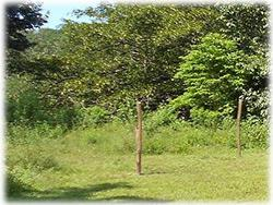land for sale in costa rica, brasil de mora real estate, lot for sale, mountain views,