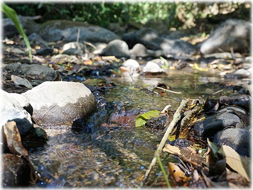 coffee farm
