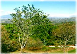 Land for sale, ciudad colon real estate, lots for sale, renowned large farm in San José,Hacienda El Rodeo, Marvelous nature, costa rica real estate, large forest, grear opportunity, investment
