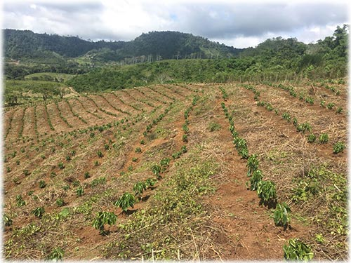 Coffee plantation for sale in Costa Rica