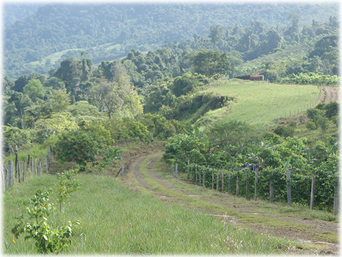 income producing, south pacific, commercial property, farms, mountain views, nature, development, investment
