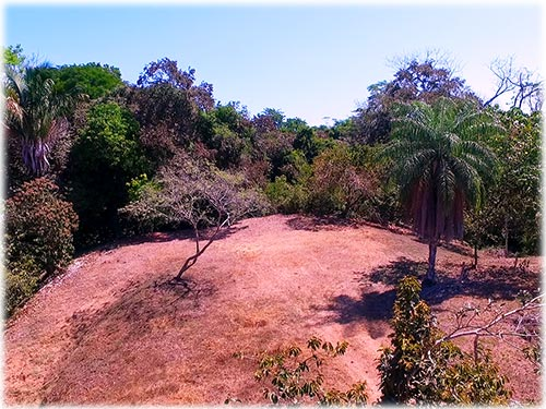 Over an acre of prime land for a home with gardens and privacy.