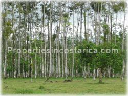 Guapiles Limon, Guapiles for sale, Guapiles real estate,land for cattle, pasture, agriculture, investment land, Costa Rica,1708