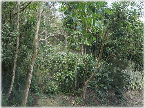 estate, access, mango, fruit, toucans, parrots, monkeys, lemon, creek, animals, pets,