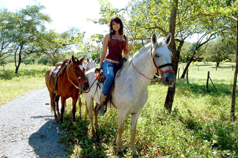 Horse Ranch For Sale In Tamarindo Id Code 2399