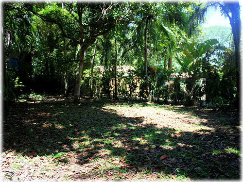 dominical, for sale, retreat, surf, jungle trees, homes, beach, ocean