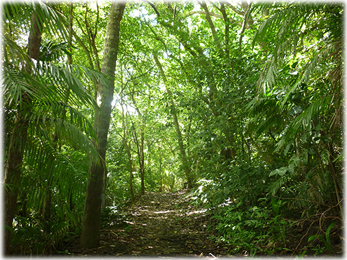 hotel for sale, for sale, unique opportunity, investment, samara real estate, nature, tropical garderns, playa samara, north pacific real estate